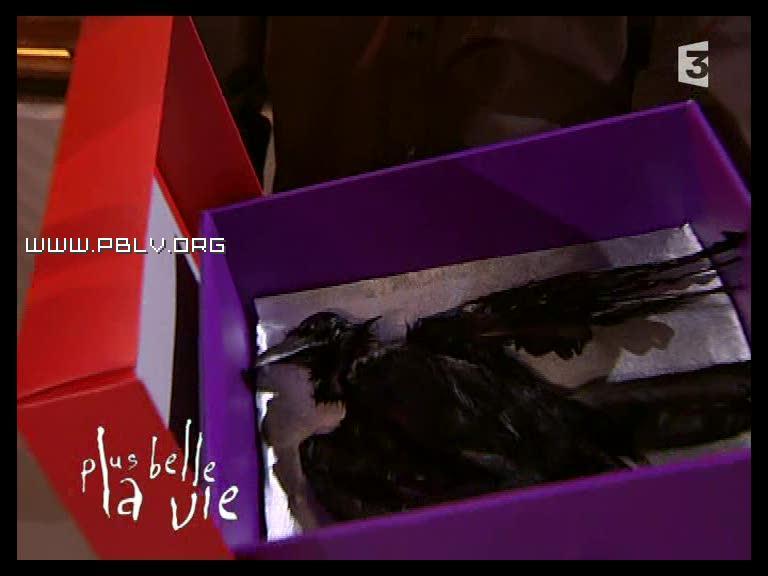 le corbeau retrouvé devant la porte du loft de vincent